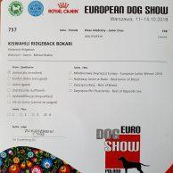 KISWAHILI RIDGEBACK BOKARI POLAND 11102018 (3)