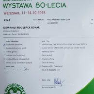 KISWAHILI RIDGEBACK BOKARI POLAND 12102018 (1)